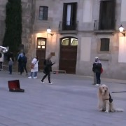 Куче одбива да се помести сè додека уличниот изведувач не заврши со својата песна
