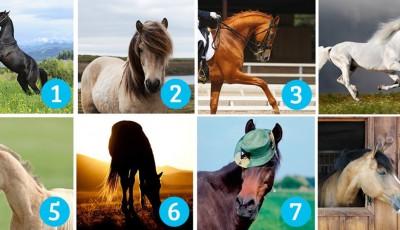 Тест на личноста: Одберете коњ и дознајте нешто повеќе за себе