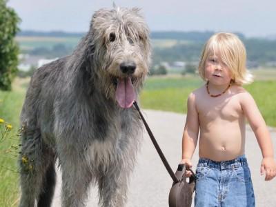 Зошто луѓето живеат подолго од кучињата? 6-годишно дете чие куче починало го открива одговорот