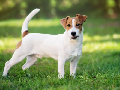 10 кучешки раси кои не се најдобар избор за семејствата со мали деца