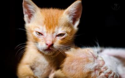 Најлутите мачиња што некогаш сте ги виделе!