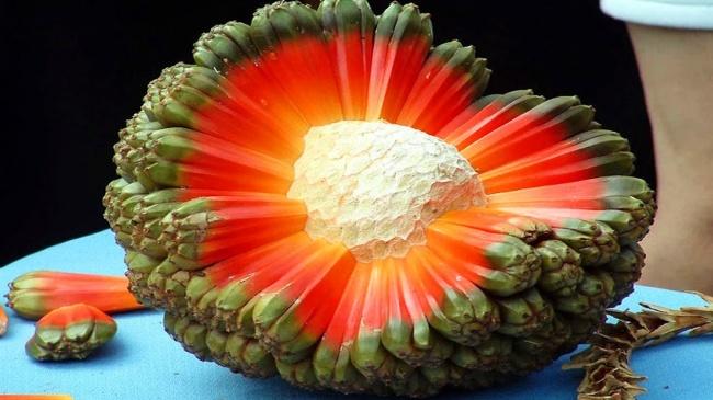 20 ретки егзотични овошја за кои сигурно немате слушнато