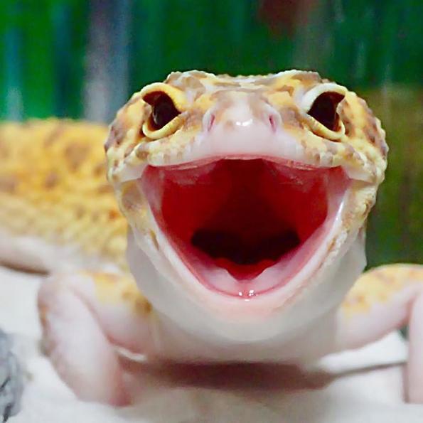 Фотографиите од овој насмеан гуштер и неговата играчка ќе ви го разубават денот!