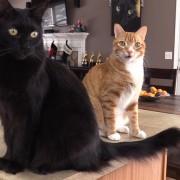 7 знаци дека мачките се вистински научници!