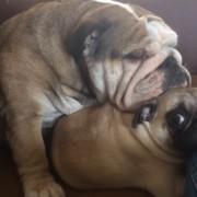Компилација од видеа со будалести кучиња што ќе ве насмее до солзи