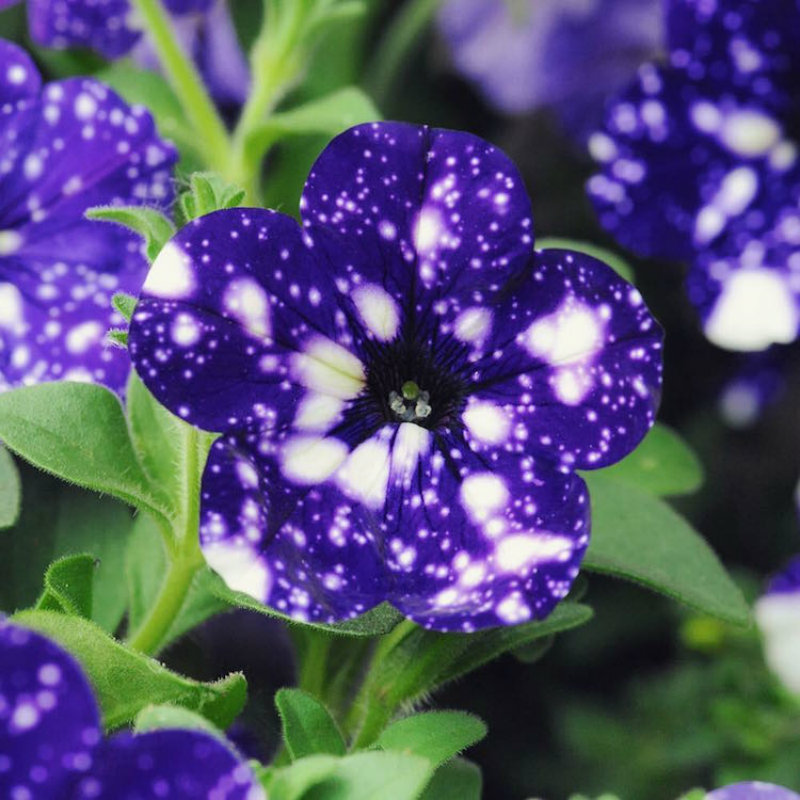 (2)cvetovi-koi-imaat-cel-univerzum-na-nivnite-listovi-kafepauza.mk