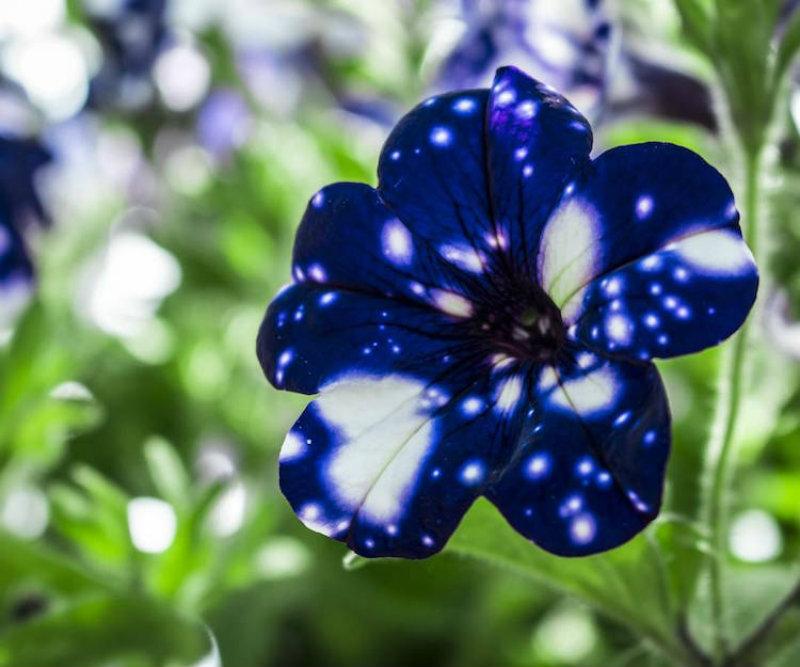 (4)cvetovi-koi-imaat-cel-univerzum-na-nivnite-listovi-kafepauza.mk