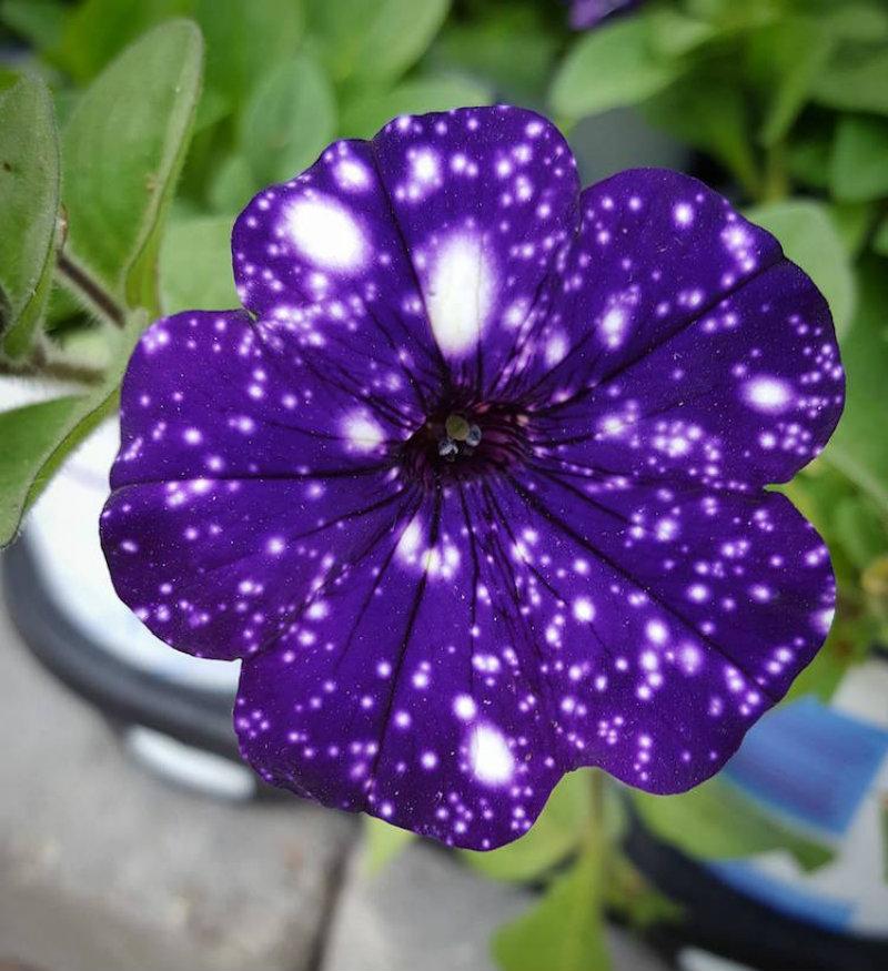 (6)cvetovi-koi-imaat-cel-univerzum-na-nivnite-listovi-kafepauza.mk