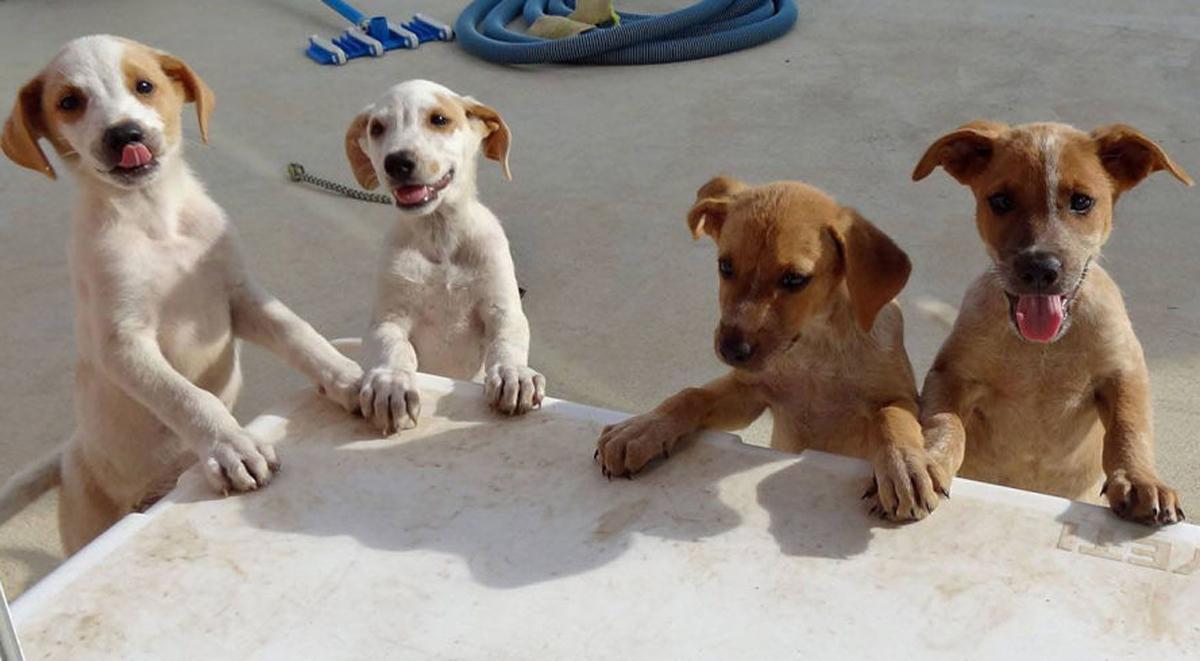 Обожавате кучиња? Дефинитивно треба да го посетите овој остров полн со мали крзнени пријателчиња!