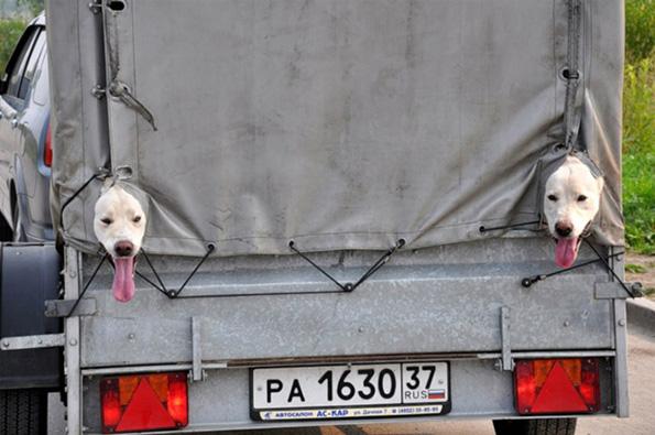 (2) ludi-fotografii-shto-kje-ve-nateraat-da-poglednete-dva-pati-www.kafepauza.mk