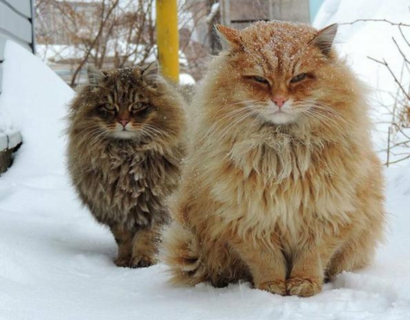 Профил на Твитер спојува фотографии од мачки со текстови од метал песни и резултатите се урнебесни!