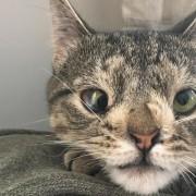 Маче со вишок хромозом за малку ќе го изгубело животот поради неговиот необичен изглед