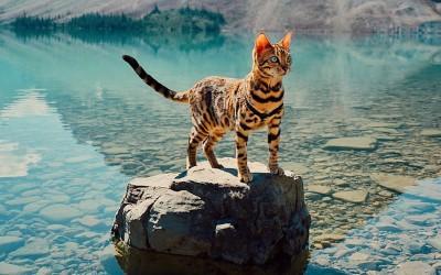 Запознајте ја Суки: Мачката што сигурно патува повеќе од вас!
