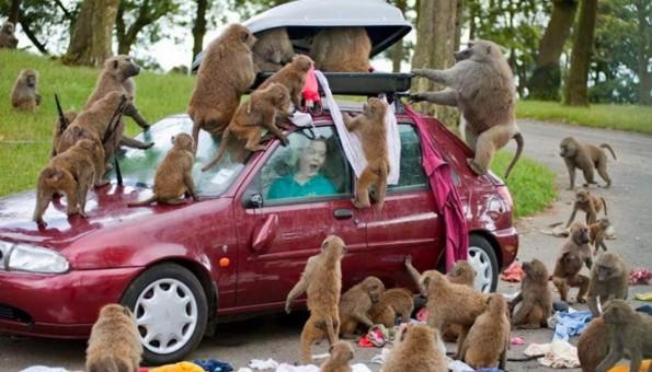 Фотографии што ќе ви докажат дека и животните понекогаш се однесуваат како вистински идиоти