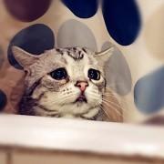 Запознајте ја Луху: Најтажното маче во светот што ќе ви го скрши срцето