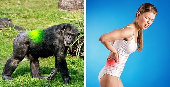 7 докази дека луѓето сѐ уште еволуираат