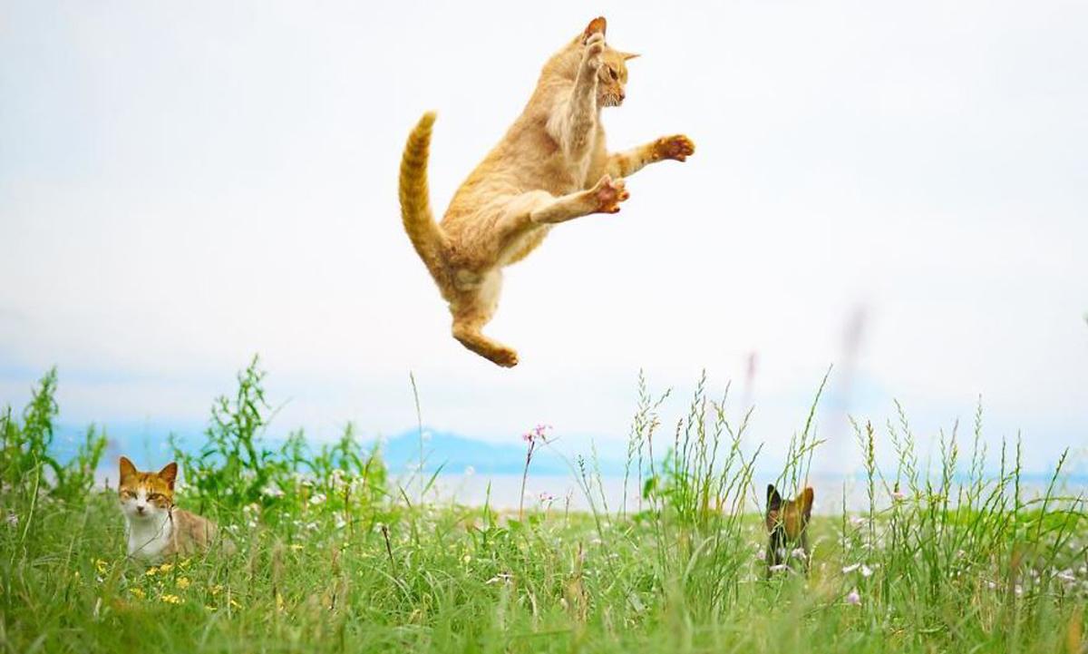 Нинџа мачки: Овој фотограф ги прикажува мачките во сосема ново светло!