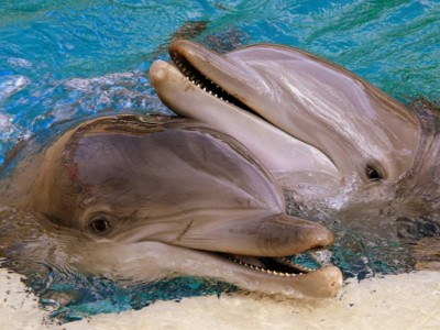 10 слатки животни што можат да ве повредат