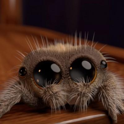 Запознајте го Лукас: Најслаткиот пајак што ќе ја излечи вашата арахнофобија