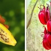 (2)kako-izgledale-nekoi-poznati-vidovi-hrana-pred-lugjeto-da-gi-kultiviraat-kafepauza.mk