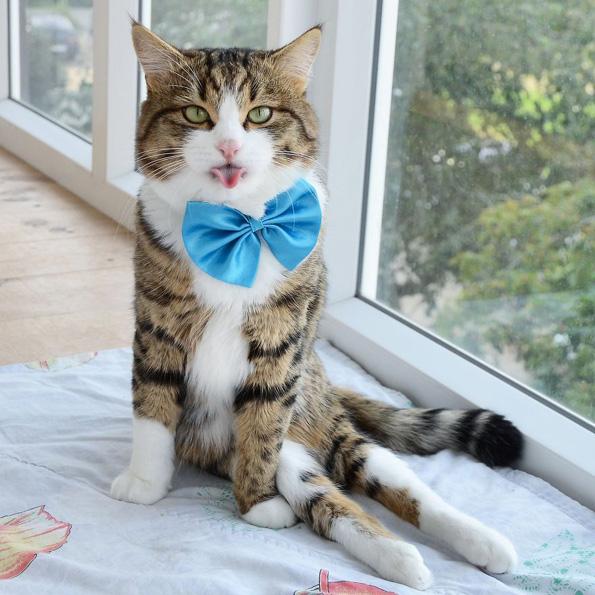 Запознајте го Рекси: Мачорот кој може да прави секакви трикови со јазикот
