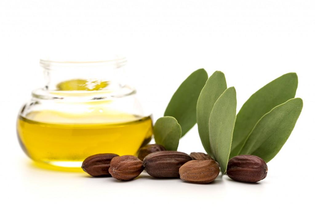 Jojoba oil, seeds and leaves
