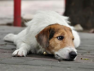 Приказна за кучето што го уби вербата во човечката љубов