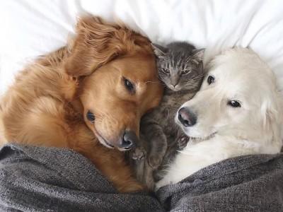 Запознајте ги овие 3 неразделни пријатели: 2 кучиња и мачка кои се секогаш заедно!