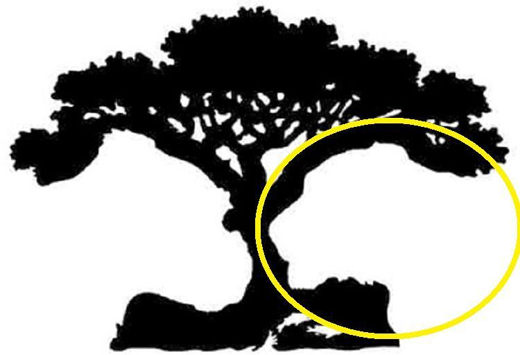 3-first-figure-what-what-where-i-voochite-on-picture-go-reveals-vasheto-vistinsko-vnatreshno-jas-www.kafepauza.mk_