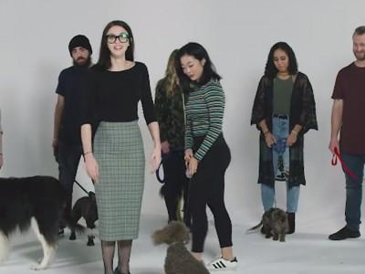 Забавно видео: Погледнете како овие луѓе се обидуваат да ги спојат кучињата со нивните сопственици