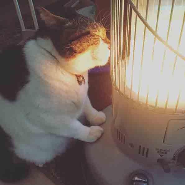 Зимска љубовна приказна: Мачка се вљубила во нејзината греалка
