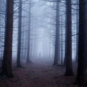 Каков ефект имаат кошмарите на нашиот мозок и како да ги надминете?