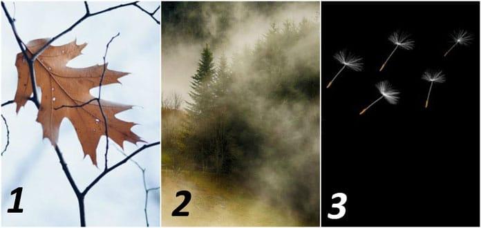 Тест: Сликата што прва ќе ја забележите открива во која насока треба да тргнете