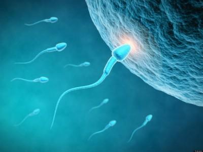 Зрак светлина го означува моментот кога сперматозоидот навлегува во јајце клетката