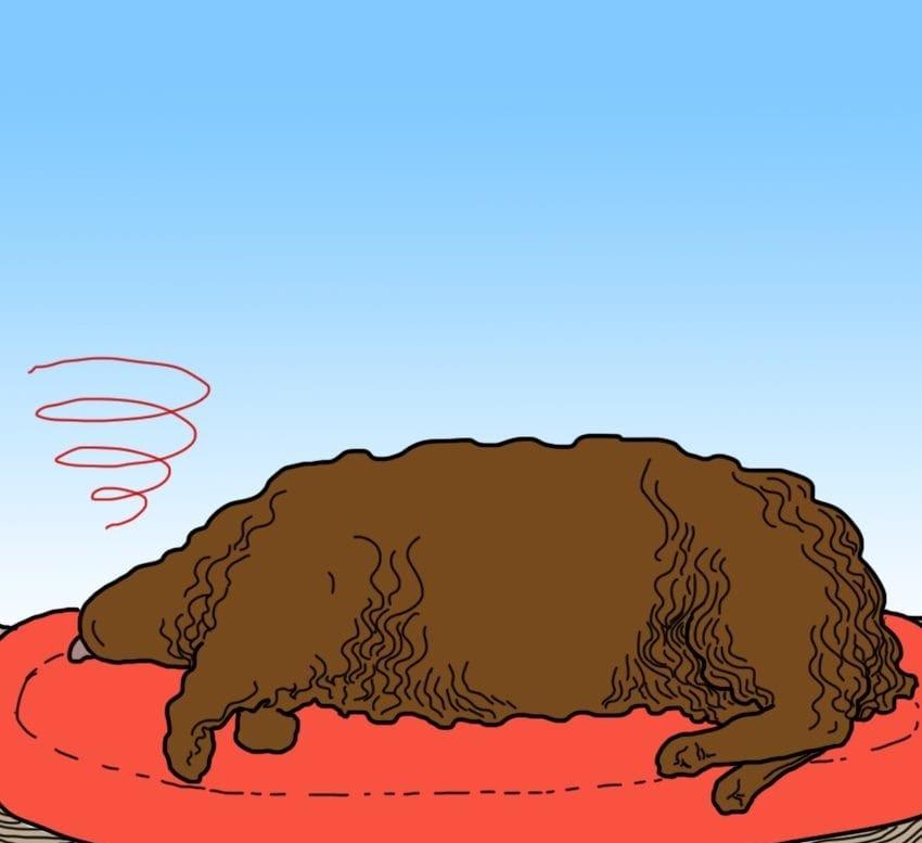 9 суптилни, но алармантни знаци дека вашето куче можеби има треска