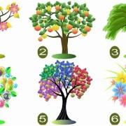 odberete-drvo-i-doznajte-gi-najsilnite-2-karakteristiki-na-vashata-lichnost-www.kafepauza.mk