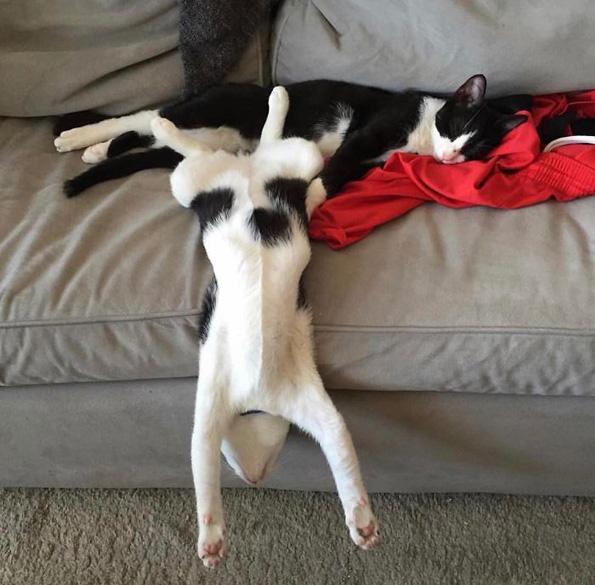 Фотографии од мачки како се тегнат што ќе ве насмеат до солзи