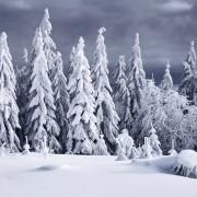Пејсажи раскажуваат зимска приказна за европските шуми покриени со снег