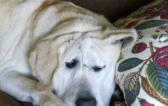 Куче со деформитет на лицето добило втора шанса со ново семејство