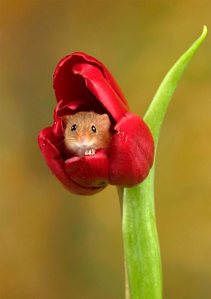 Неверојатни фотографии од полски глувци кои ќе ви го разубават денот
